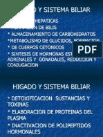 Fp Hepatica