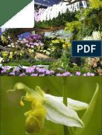 festivalul-orhideelor