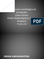 #12 Identificación morfológica de artrópodos.pptx