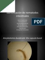 #09 Identificacion de nematodos intestinales.ppt