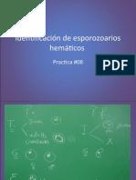 #08 Identificacion de esporozoarios hematicos.pptx