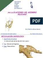 articulacionesmiembroplvico-110227123253-phpapp02.ppt