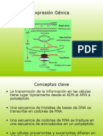 Información Genetica