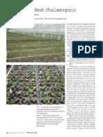 Growing the Best Phalaenopsis Part 4