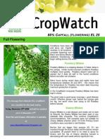 Adelaide Hills Crop Watch 201109