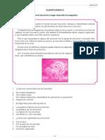 4º ensayo.pdf