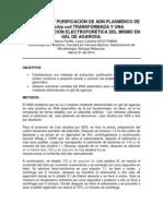 Extracción y Caracterización Electroforética en Dna Plasmídico de Escherichia Coli Transformada