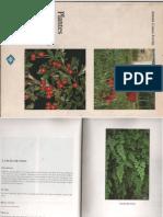 Plantes Vall de Albaida, herbario plantas del mediterraneo