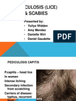 scabies lice