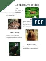 Animale Si Plante Protejate