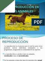 Reproduccion en Animales v3