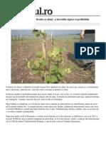 Moldova Economie o Moldoveanca Plantat Livadacu Alune Investitie Sigura Profitabila