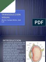 Transduccion Visual