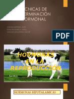 TÉCNICAS DE DETERMINACIÓN HORMONAL  EXOSICIN - copia.pptx