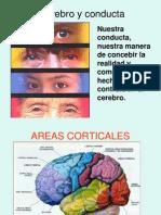 Cerebro y Conducta2011[1]