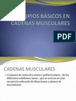 Principios Básicos en Cadenas Musculares