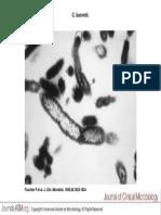 J. Clin. Microbiol. 1998 Jul 36(7) 1823-34, Fig. 1