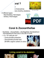 Coral Reefs7984