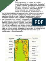 3 Curs Vacuole Incl Ergastice Perete Cel