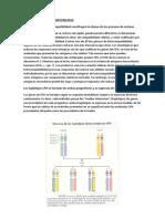 Antigenos de Histocompatibilidad
