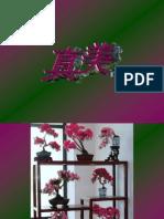 Blumen,Blumen,Blumen