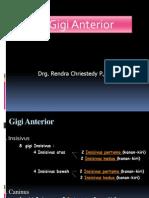 Anatomi Gg Anterior.2