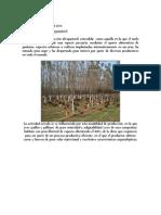 Proyecto Silvopastoril de Gallinas de la Dra Martha Franco