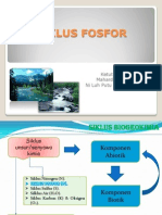 Siklus Fosfor II
