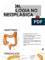 189493331 Colon Patologia No Neoplasica