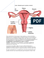 Dolor en La Menstruación