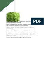 AFA alge