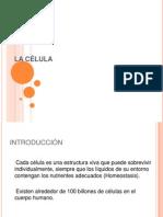CLASE1celula
