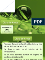 Clase 13 - Ciclo de Krebs