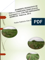 Comportamiento Productivo de Cuatro Variedades Maní (Arachis