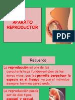 1.-APARATOREPRDUCTORHUMANO