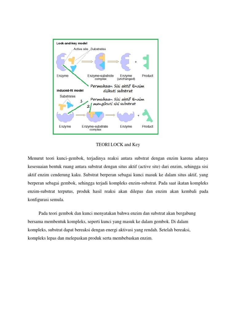 Cara Kerja Enzim Menurut Teori Induced Fit - Info Seputar ...