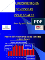 Oscurecimiento en ponedoras comerciales JIT b