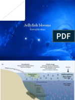 jellyfish eutrophication.ppt