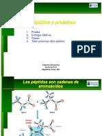 051 Peptidos Proteinas CLASE 2013 03 30
