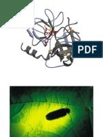 Aminoacidos Petidos y Proteinas 1