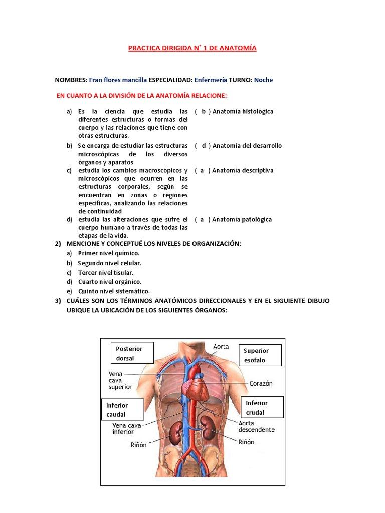 PRACTICA DIRIGIDA DE ANATOMÍA N 1.docx