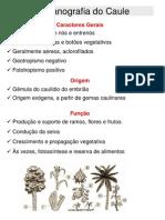 Caule Organografia