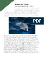Delfini si drogano