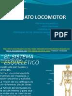 21 - Presentación 21 - Aparato Locomotor
