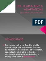 Cellular Injury & Adaptations