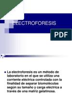 Electroforesis 2013 i