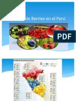 Cultivo de Berries en El Perú