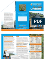 Wild Oregano Brochure
