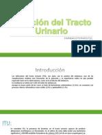 Infección del Tracto Urinario.pptx