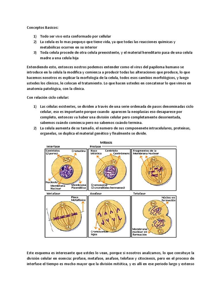 Trastornos Del Crecimiento y Diferenciacion Celular